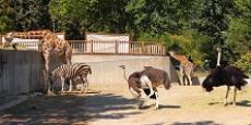 مجموعه داده ویژگی های حیوانات در باغ وحش